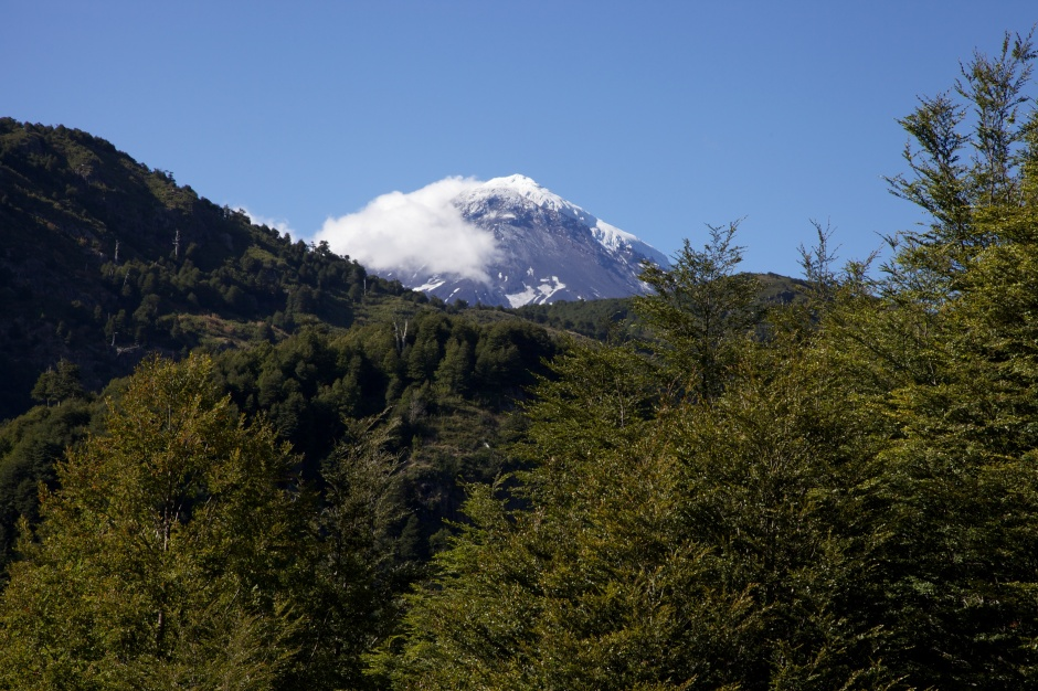 Lanin appearing above the trees