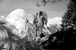 Half Dome with tree stump