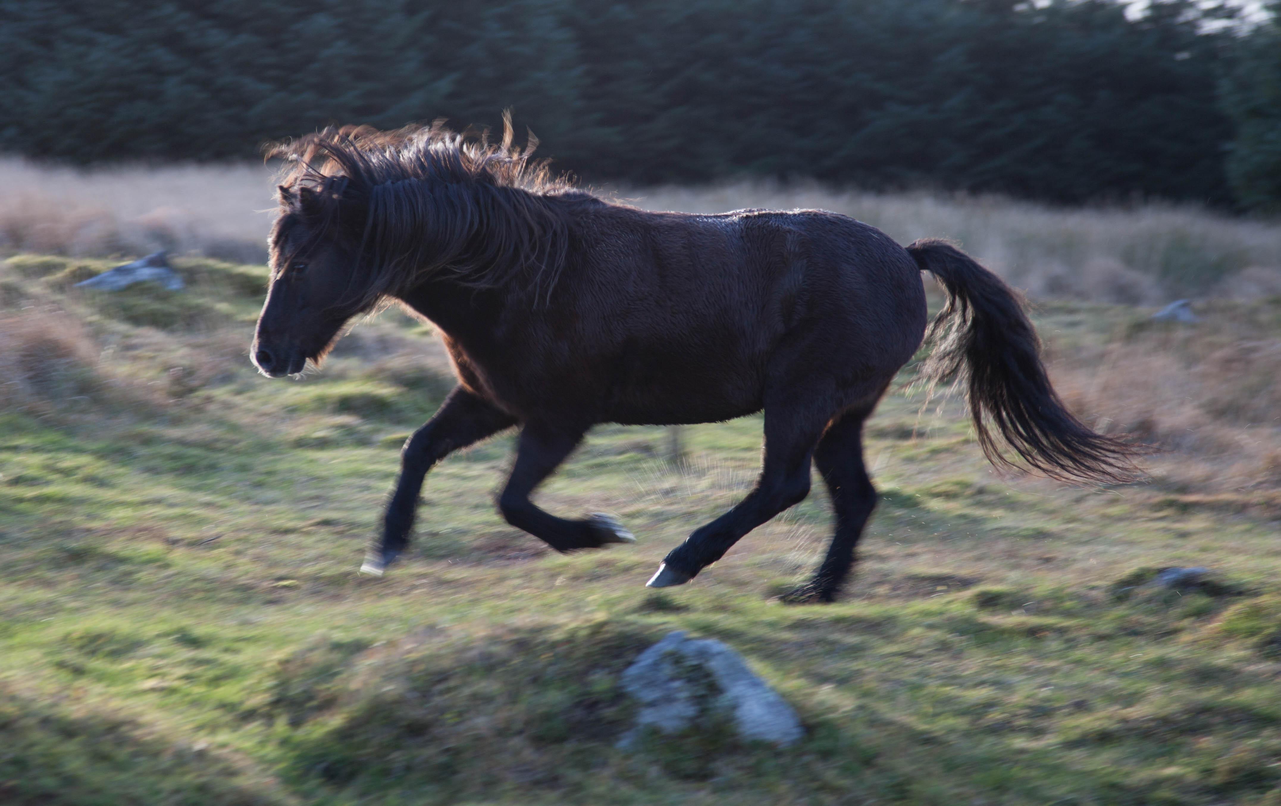 20131114-Dartmoor-44