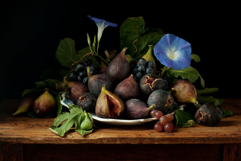 Figs and Morning Glories GG ©Paulette Tavormina