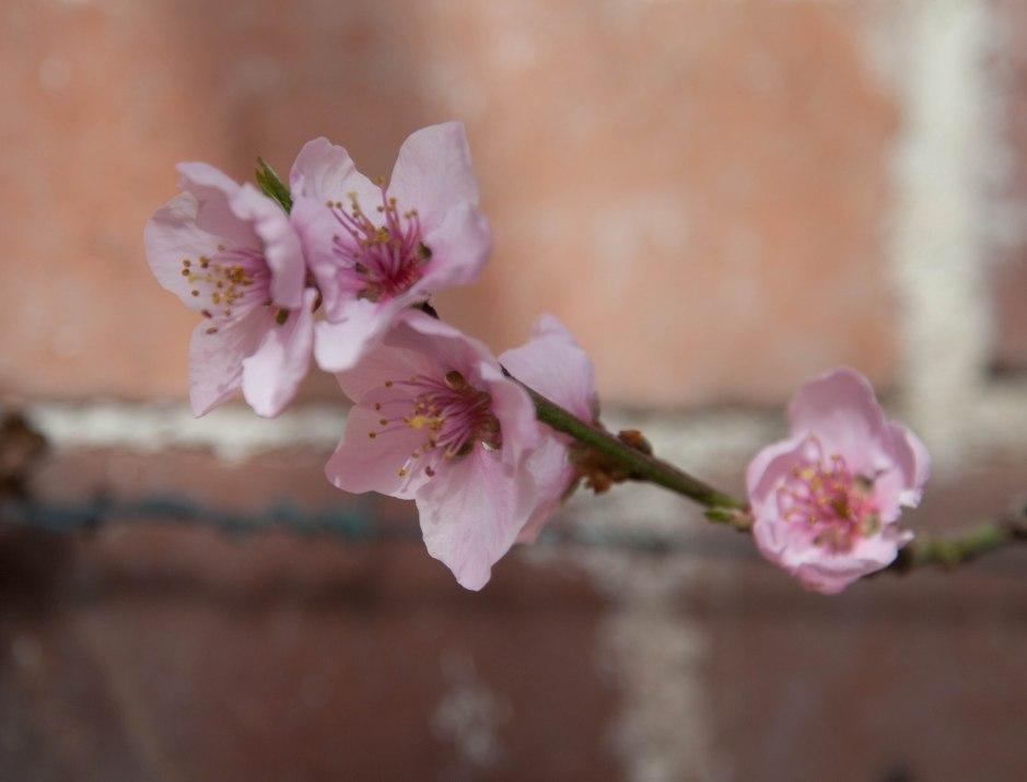 20140307-Spring-9