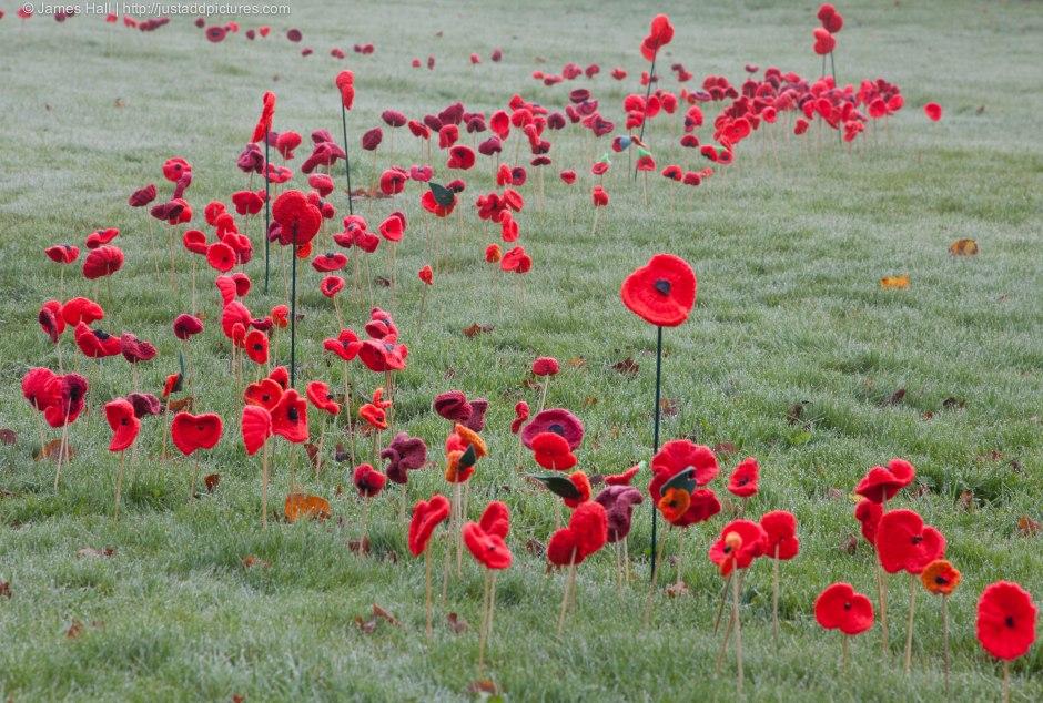 20141109-Poppies-10