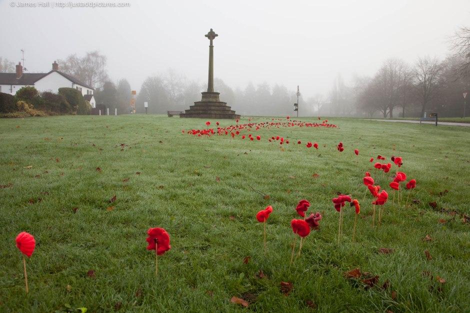 20141109-Poppies-3