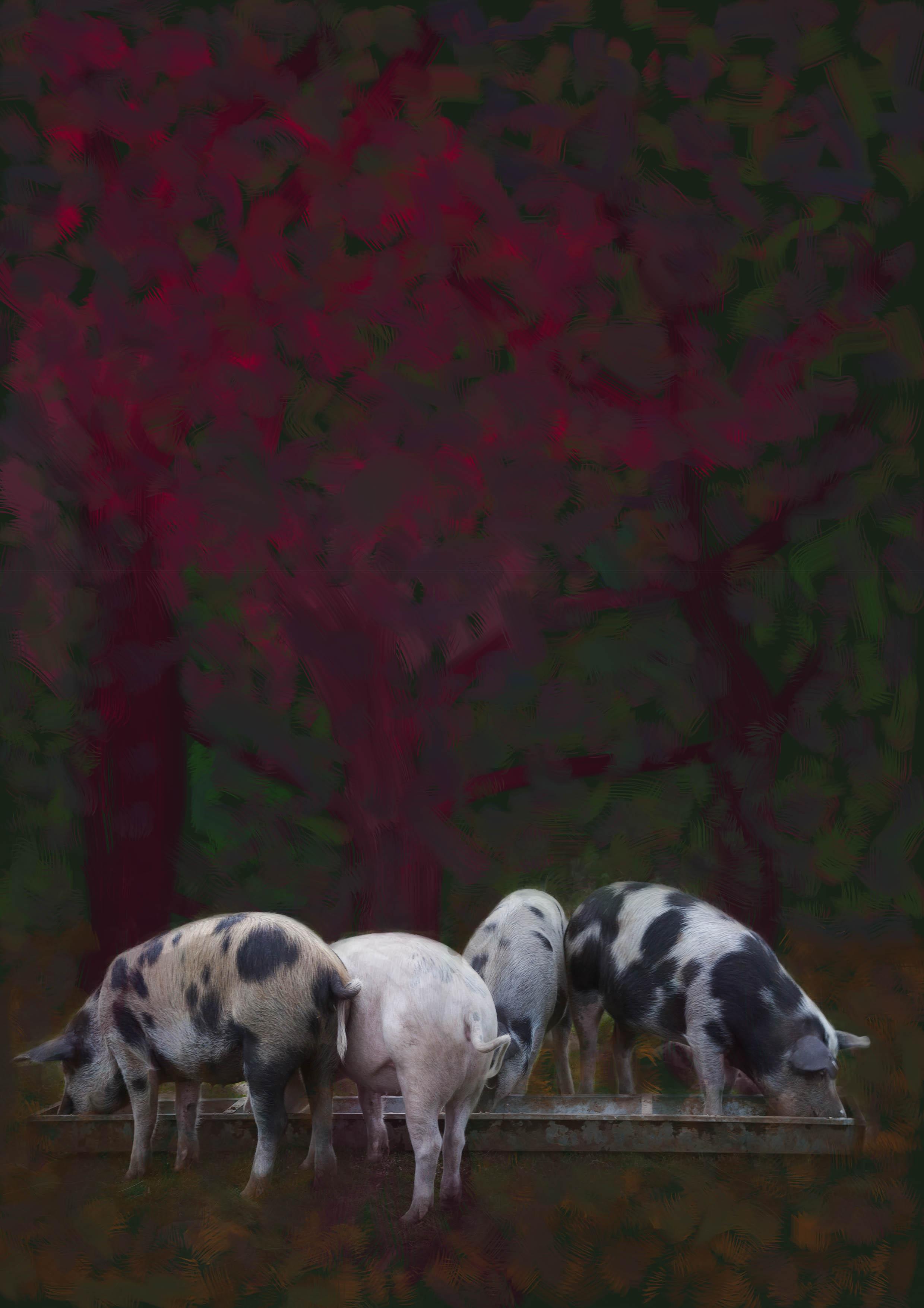 20160925-pigs-1